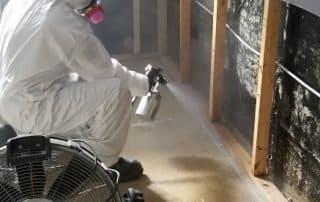décontamination moisissure